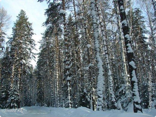 Намело, Навьюжило. Все деревья  В кружеве: Снег на соснах, На кустах, В белых шубках ели. И запутались в ветвях  Буйные метели.   (Н.Гончаров)   фото 5