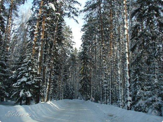 Намело, Навьюжило. Все деревья  В кружеве: Снег на соснах, На кустах, В белых шубках ели. И запутались в ветвях  Буйные метели.   (Н.Гончаров)   фото 3