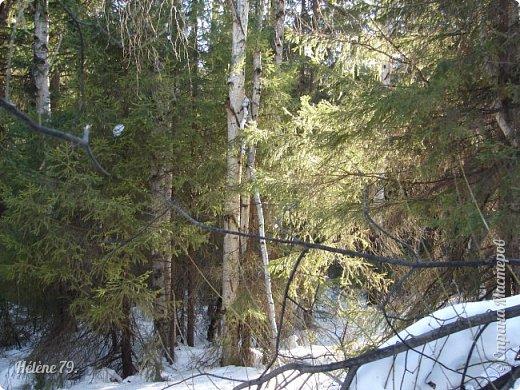 Намело, Навьюжило. Все деревья  В кружеве: Снег на соснах, На кустах, В белых шубках ели. И запутались в ветвях  Буйные метели.   (Н.Гончаров)   фото 6