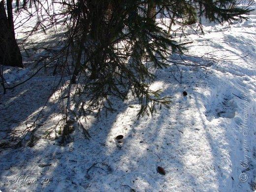 Намело, Навьюжило. Все деревья  В кружеве: Снег на соснах, На кустах, В белых шубках ели. И запутались в ветвях  Буйные метели.   (Н.Гончаров)   фото 11