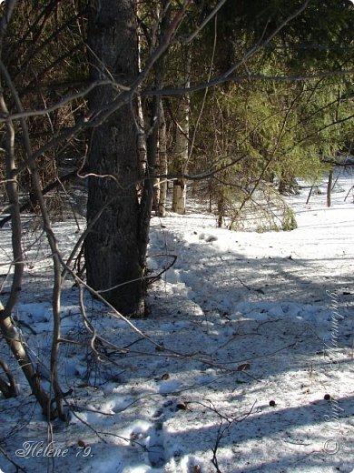 Намело, Навьюжило. Все деревья  В кружеве: Снег на соснах, На кустах, В белых шубках ели. И запутались в ветвях  Буйные метели.   (Н.Гончаров)   фото 12