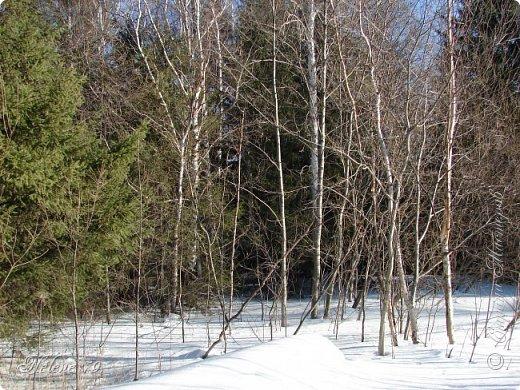 Намело, Навьюжило. Все деревья  В кружеве: Снег на соснах, На кустах, В белых шубках ели. И запутались в ветвях  Буйные метели.   (Н.Гончаров)   фото 13