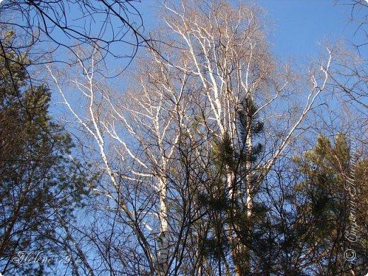 Намело, Навьюжило. Все деревья  В кружеве: Снег на соснах, На кустах, В белых шубках ели. И запутались в ветвях  Буйные метели.   (Н.Гончаров)   фото 17