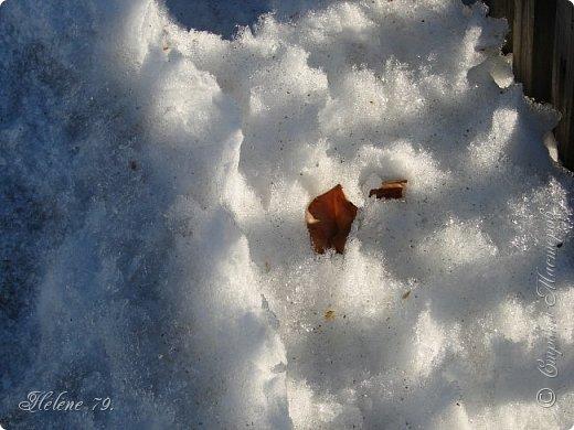 Намело, Навьюжило. Все деревья  В кружеве: Снег на соснах, На кустах, В белых шубках ели. И запутались в ветвях  Буйные метели.   (Н.Гончаров)   фото 18