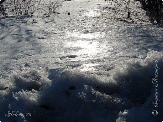 Намело, Навьюжило. Все деревья  В кружеве: Снег на соснах, На кустах, В белых шубках ели. И запутались в ветвях  Буйные метели.   (Н.Гончаров)   фото 22