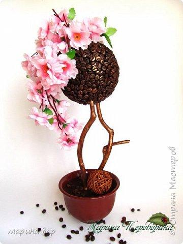 Кофейное деревце счастья. фото 1