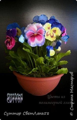 анютки, огоньки и тюльпаны из ХФ фото 1