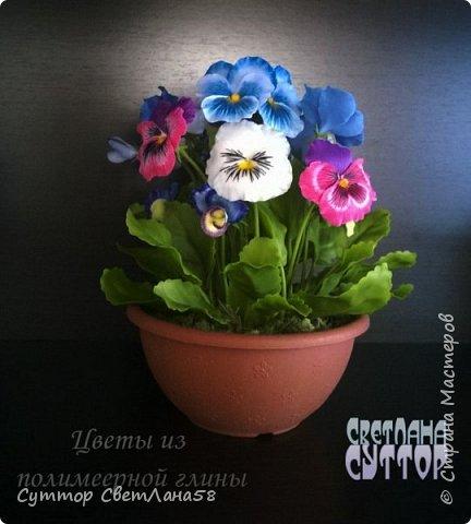 анютки, огоньки и тюльпаны из ХФ фото 2