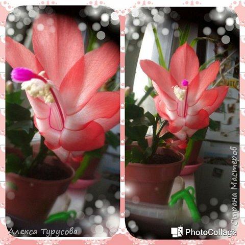 Хочется тепла,утром навеяло.За окном хоть и солнце,но холодно и ветер,на окне цветы зацвели и душа просит весны,знойного лета,прекрасного))) фото 3