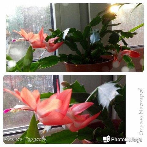 Хочется тепла,утром навеяло.За окном хоть и солнце,но холодно и ветер,на окне цветы зацвели и душа просит весны,знойного лета,прекрасного))) фото 2