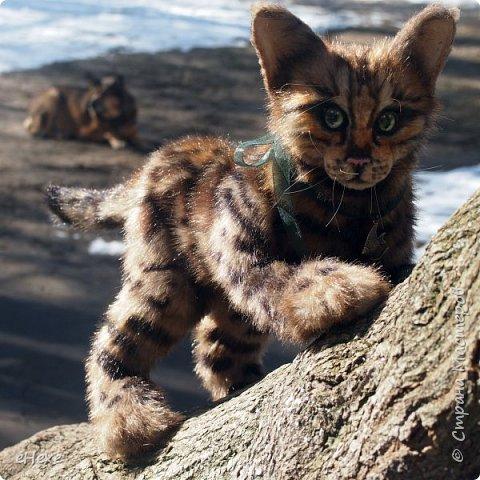 Кошка, рожденная в муках. фото 3
