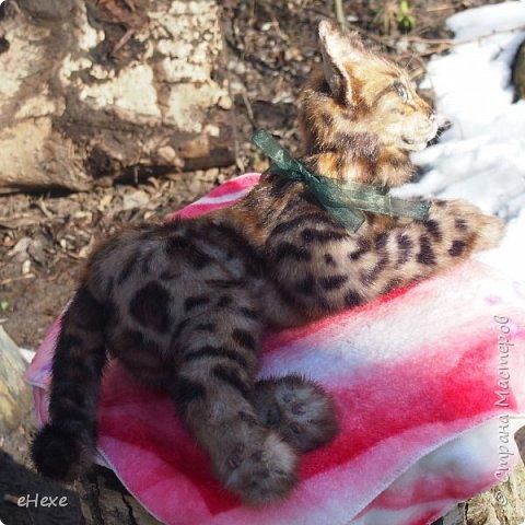 Кошка, рожденная в муках. фото 4