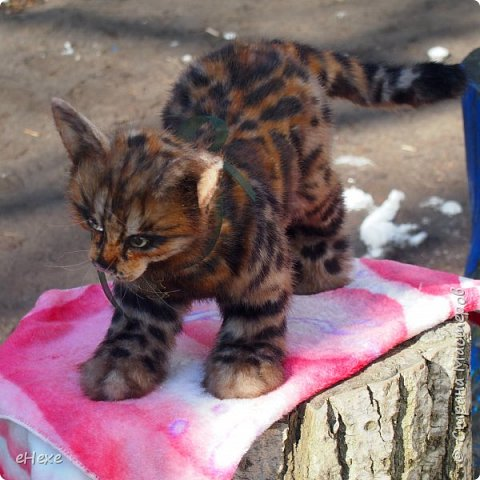 Кошка, рожденная в муках. фото 2