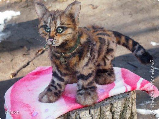 Кошка, рожденная в муках. фото 6