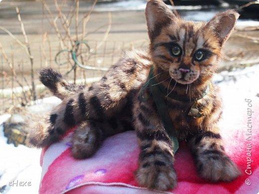 Кошка, рожденная в муках. фото 1