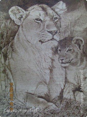 Львица и львёнок