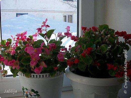 Мы с моими цветами смотрим в окно: горы снега! А мы хотим весну, тепло, хотим на волю,  на воздух. Прогноз погоды пока неутешительный, только начало таять и опять целую неделю снег, метели. Но мы не унываем, мы готовимся, наряжаемся к весне, мечтаем о лете.  Смотрите сами.  фото 12