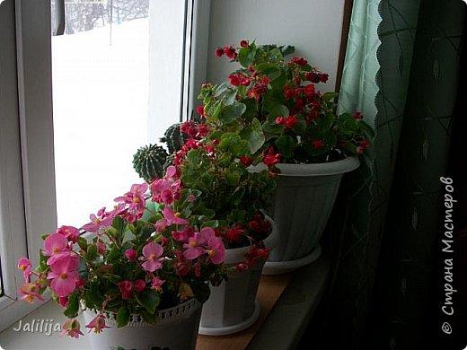 Мы с моими цветами смотрим в окно: горы снега! А мы хотим весну, тепло, хотим на волю,  на воздух. Прогноз погоды пока неутешительный, только начало таять и опять целую неделю снег, метели. Но мы не унываем, мы готовимся, наряжаемся к весне, мечтаем о лете.  Смотрите сами.  фото 13