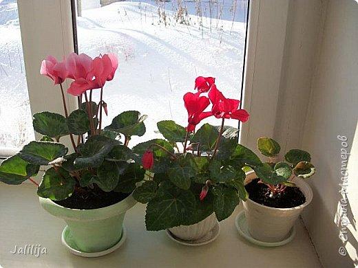 Мы с моими цветами смотрим в окно: горы снега! А мы хотим весну, тепло, хотим на волю,  на воздух. Прогноз погоды пока неутешительный, только начало таять и опять целую неделю снег, метели. Но мы не унываем, мы готовимся, наряжаемся к весне, мечтаем о лете.  Смотрите сами.  фото 44