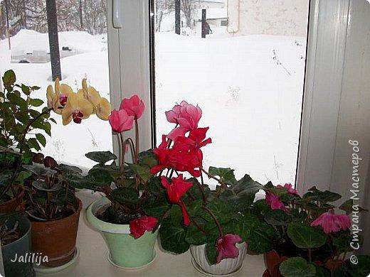 Мы с моими цветами смотрим в окно: горы снега! А мы хотим весну, тепло, хотим на волю,  на воздух. Прогноз погоды пока неутешительный, только начало таять и опять целую неделю снег, метели. Но мы не унываем, мы готовимся, наряжаемся к весне, мечтаем о лете.  Смотрите сами.  фото 46