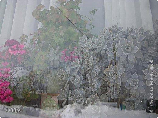 Мы с моими цветами смотрим в окно: горы снега! А мы хотим весну, тепло, хотим на волю,  на воздух. Прогноз погоды пока неутешительный, только начало таять и опять целую неделю снег, метели. Но мы не унываем, мы готовимся, наряжаемся к весне, мечтаем о лете.  Смотрите сами.  фото 58