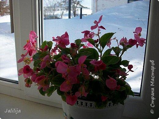Мы с моими цветами смотрим в окно: горы снега! А мы хотим весну, тепло, хотим на волю,  на воздух. Прогноз погоды пока неутешительный, только начало таять и опять целую неделю снег, метели. Но мы не унываем, мы готовимся, наряжаемся к весне, мечтаем о лете.  Смотрите сами.  фото 6
