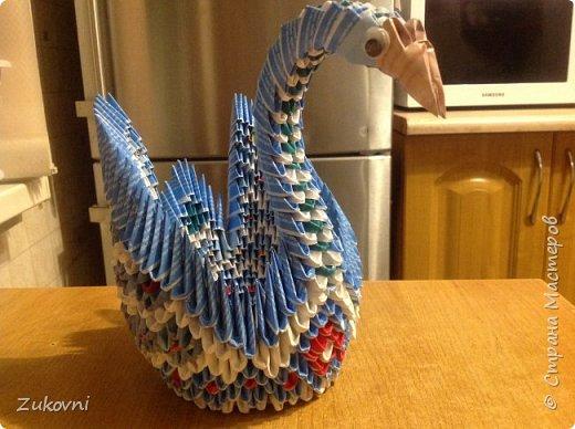 Радужная лебедь фото 4