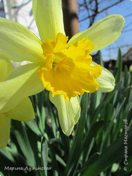 Всем привет!  Наступила весна и мы с детишками всё свободное время стараемся проводить на свежем воздухе. Мы ходим в небольшие походы по нашим местным окрестностям, а во время этих прогулок мы стараемся по-внимательней присматриваться ко всему, что нас окружает.  А окружает нас невероятная красота!!! Хочу поделится с Вами нашими мартовскими находками.... фото 67