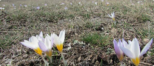 Всем привет!  Наступила весна и мы с детишками всё свободное время стараемся проводить на свежем воздухе. Мы ходим в небольшие походы по нашим местным окрестностям, а во время этих прогулок мы стараемся по-внимательней присматриваться ко всему, что нас окружает.  А окружает нас невероятная красота!!! Хочу поделится с Вами нашими мартовскими находками.... фото 2