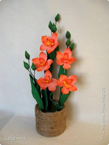 орхидея дендробиум фото 1