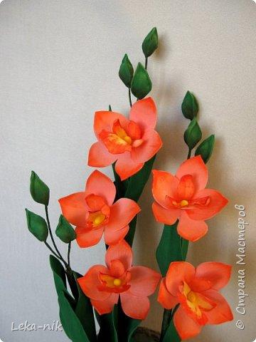 орхидея дендробиум фото 2