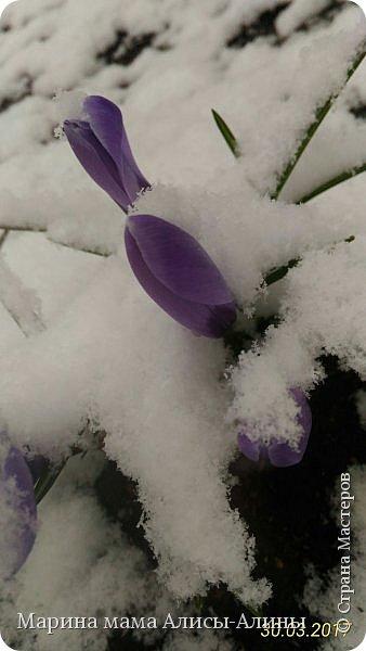 Весна в этом году у нас в Воронеже началась рано.Не смотря на снежную зиму всё быстро потаяло. Мы уже радовались тёплому солнышку!И тут опять пошёл снег!Да не просто снег, а целая метель началась!Это было 30го марта.Немного пофоткала по дороге на работу. фото 1
