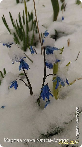 Весна в этом году у нас в Воронеже началась рано.Не смотря на снежную зиму всё быстро потаяло. Мы уже радовались тёплому солнышку!И тут опять пошёл снег!Да не просто снег, а целая метель началась!Это было 30го марта.Немного пофоткала по дороге на работу. фото 3