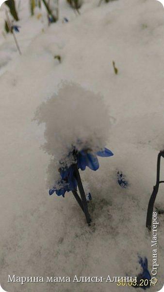 Весна в этом году у нас в Воронеже началась рано.Не смотря на снежную зиму всё быстро потаяло. Мы уже радовались тёплому солнышку!И тут опять пошёл снег!Да не просто снег, а целая метель началась!Это было 30го марта.Немного пофоткала по дороге на работу. фото 4