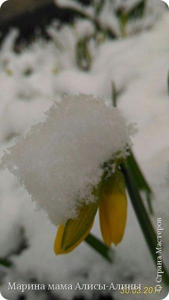 Весна в этом году у нас в Воронеже началась рано.Не смотря на снежную зиму всё быстро потаяло. Мы уже радовались тёплому солнышку!И тут опять пошёл снег!Да не просто снег, а целая метель началась!Это было 30го марта.Немного пофоткала по дороге на работу. фото 5