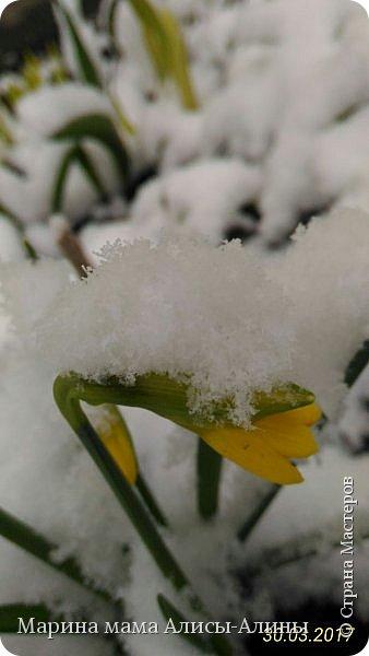 Весна в этом году у нас в Воронеже началась рано.Не смотря на снежную зиму всё быстро потаяло. Мы уже радовались тёплому солнышку!И тут опять пошёл снег!Да не просто снег, а целая метель началась!Это было 30го марта.Немного пофоткала по дороге на работу. фото 6