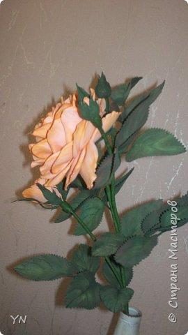 роза из фома фото 4