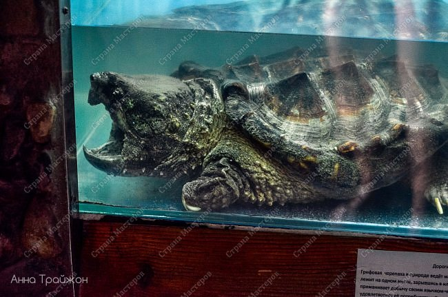 Вот такими чудесными снимками закончился наш поход в океанариум! Насколько все-таки чудесны эти прекрасные создания! Чувствуется характер каждого.   Эта рыбка - нарцисс фото 7