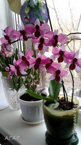 Всем, привет!  Украсила свою молодую , пока не цветущую орхидею, вот такими  цветами. Смотрятся не окне  потрясающе. Цветы делала по видео урокам в интернете. фото 5
