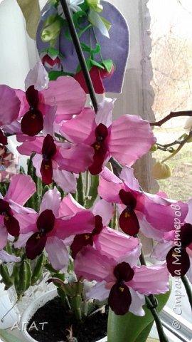 Всем, привет!  Украсила свою молодую , пока не цветущую орхидею, вот такими  цветами. Смотрятся не окне  потрясающе. Цветы делала по видео урокам в интернете. фото 1