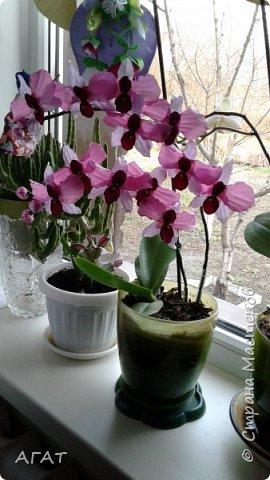 Всем, привет!  Украсила свою молодую , пока не цветущую орхидею, вот такими  цветами. Смотрятся не окне  потрясающе. Цветы делала по видео урокам в интернете. фото 2
