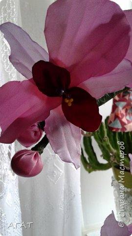 Всем, привет!  Украсила свою молодую , пока не цветущую орхидею, вот такими  цветами. Смотрятся не окне  потрясающе. Цветы делала по видео урокам в интернете. фото 3