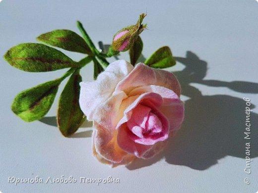 Чайная роза. Элегантный и очень нежный аксессуар-брошь. Шерсть.. фото 2