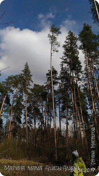 Добрый вечер моя любимая страна! Поздравляю всех с Вербным воскресеньем! И приглашаю вас погулять с нами по лесу! фото 19