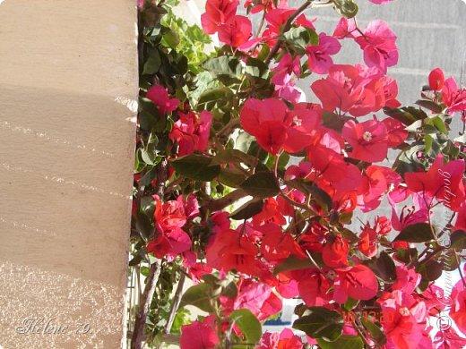 Здравствуйте, дорогие жители нашей прекрасной СМ! Приглашаю ВАС совершить  небольшое путешествие на греческий остров Санторини. фото 1