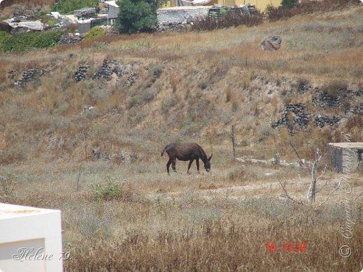 Здравствуйте, дорогие жители нашей прекрасной СМ! Приглашаю ВАС совершить  небольшое путешествие на греческий остров Санторини. фото 43
