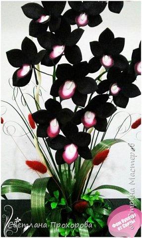 Орхидея дракула фото 1