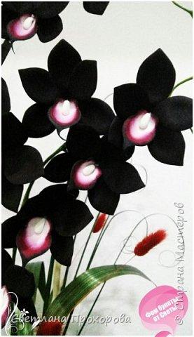 Орхидея дракула фото 2