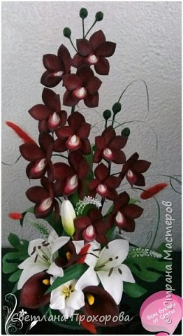 Орхидея дракула фото 3