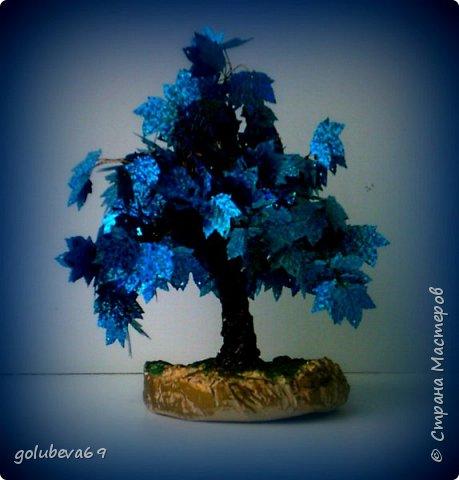 Синий клён. фото 1